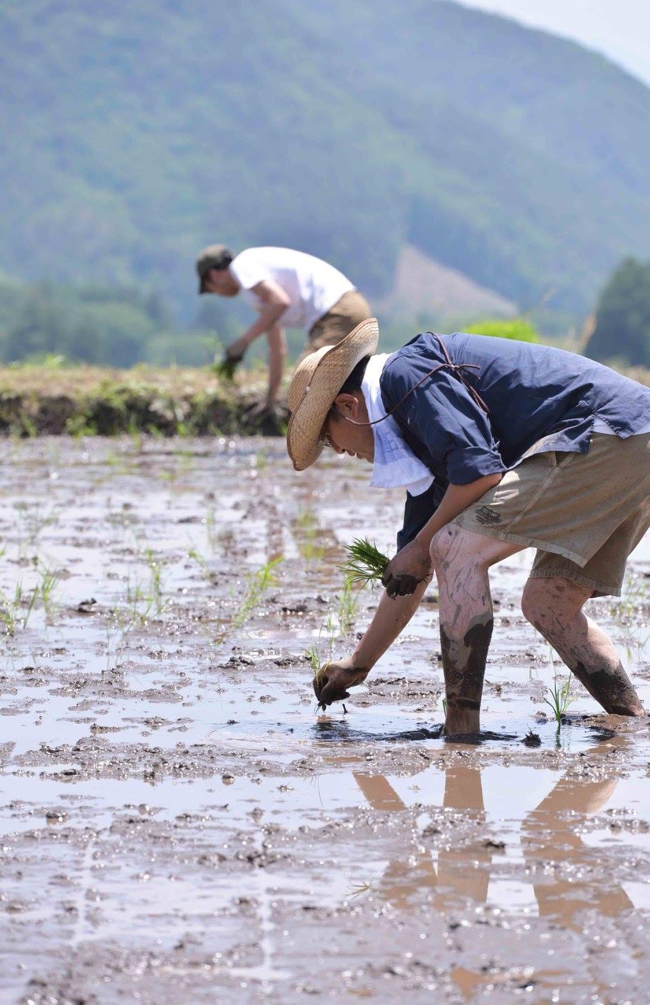 農夫☆小斉太郎の視点・論点